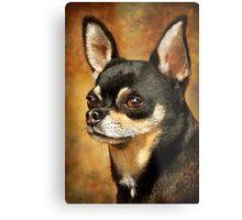 Chihuahua Portrait Metal Print