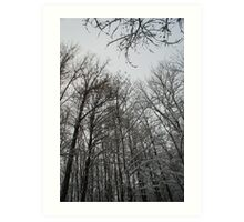 Winter trees in Austria Art Print