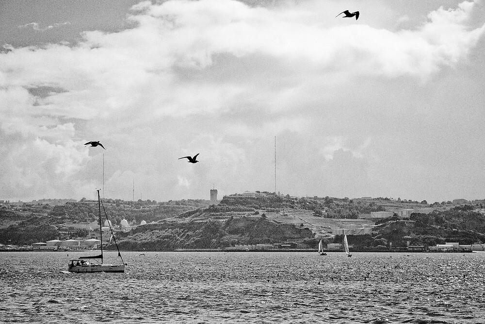 Follow the seagulls... by Nayko