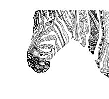 Pen and Ink Zebra Photographic Print