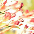 Flower Fireworks by Elizabeth De La Cruz