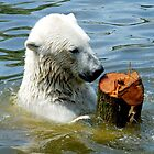 Polar bear with his toy by Arie Koene