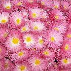Pink smiles by Ana Belaj