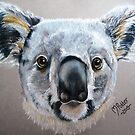 Up Close and Personal Koala by Michelle Potter