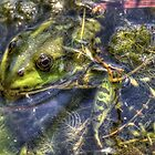 Marsh frog by larry flewers