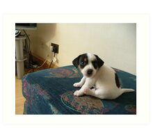 Puppy  Jerry lee Art Print