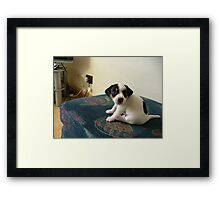 Puppy  Jerry lee Framed Print