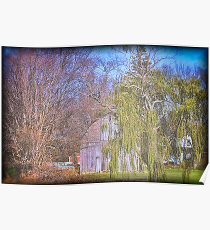 Old Barn with Willow Tree Poster
