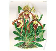 Iconagraphy of Orchids Iconographie des Orchidées Jean Jules Linden V17 1906 0206 Poster