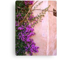 Climbing up the walls... Canvas Print