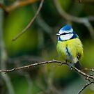bluey by jaffa