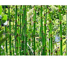 Reeds Along the River Photographic Print