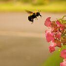 Don't Worry, Bee Happy  by Heather Grace Stewart
