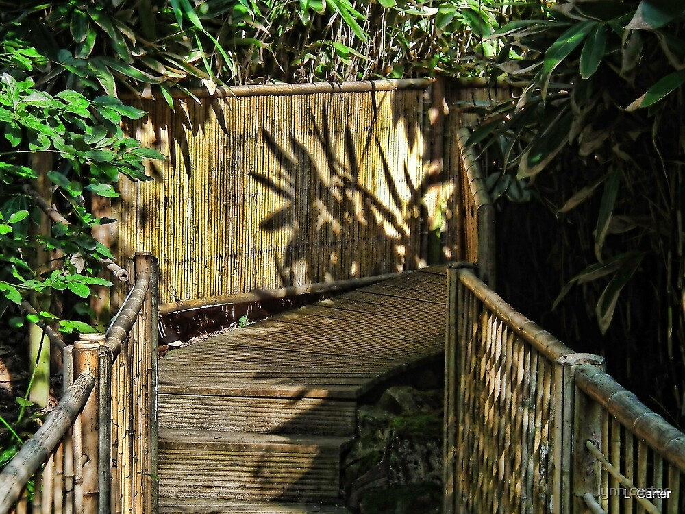 Bamboo Walkway At Abbotsbury Gardens,,, Dorset UK by lynn carter