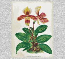 Iconagraphy of Orchids Iconographie des Orchidées Jean Jules Linden V17 1906 0214 Baby Tee