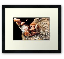 So Small a Thing Framed Print