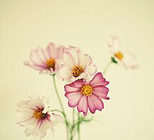Summer Flowers by Cassia