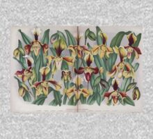 Iconagraphy of Orchids Iconographie des Orchidées Jean Jules Linden V14 1898 0161 Baby Tee