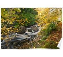 Autumn in Lews Castle Grounds, Stornoway Poster