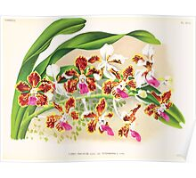 Iconagraphy of Orchids Iconographie des Orchidées Jean Jules Linden V17 1906 0154 Poster
