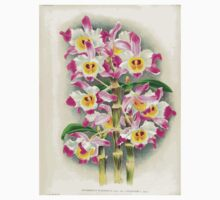 Iconagraphy of Orchids Iconographie des Orchidées Jean Jules Linden V17 1906 0028 Kids Tee