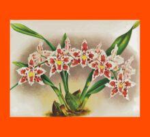 Iconagraphy of Orchids Iconographie des Orchidées Jean Jules Linden V17 1906 0098 Kids Tee