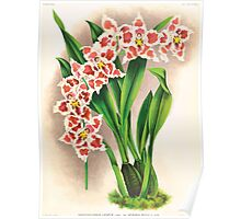 Iconagraphy of Orchids Iconographie des Orchidées Jean Jules Linden V17 1906 0063 Poster