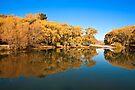 Autumn at Sailors Cutting, Lake Benmore NZ by Odille Esmonde-Morgan