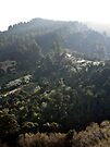 Taieri Gorge Railway Scene by Odille Esmonde-Morgan
