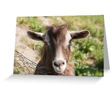 goat in the mountains Greeting Card