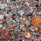 'Seashells & Sand' by Jerry Kirk