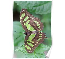 butterfly on the flower Poster