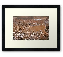 Blending in with the junipers Framed Print