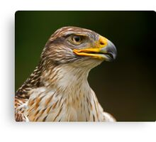 Ferruginous Hawk Portrait Canvas Print