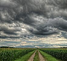 Field of Dreams by Bill Maynard