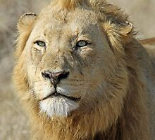 Majingilane lion(I am king!) by jozi1
