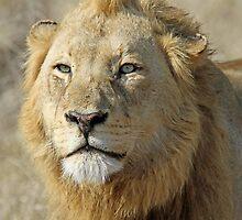 Majingilane lion(I am king!) by jozi1