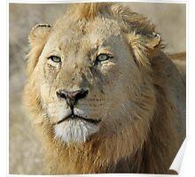 Majingilane lion(I am king!) Poster