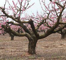 Peach Tree by Bob Hardy