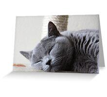 Napping Greeting Card