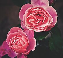 simply roses 1 by LianeB