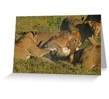 Lion -crocodile interaction 4 Greeting Card