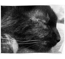 Sleeping kitty.  Poster