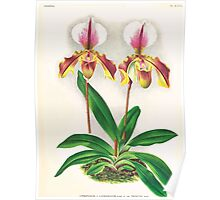 Iconagraphy of Orchids Iconographie des Orchidées Jean Jules Linden V17 1906 0190 Poster