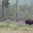 Boreal Bison by Jillian Johnston