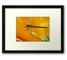 Majestic Green Darner Dragonfly Framed Print