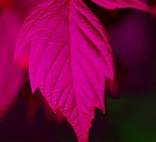 Leaf by Samden