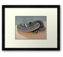 Deadly Snake Framed Print