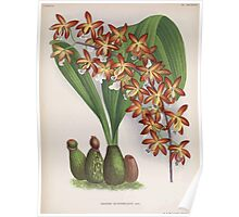 Iconagraphy of Orchids Iconographie des Orchidées Jean Jules Linden V16 1900 0094 Poster
