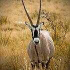 Oryx of Namibia by lucynab